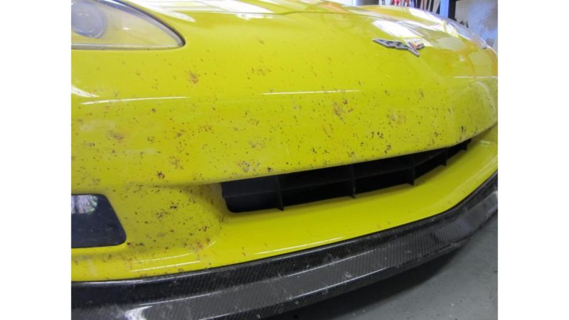 yellow bugs