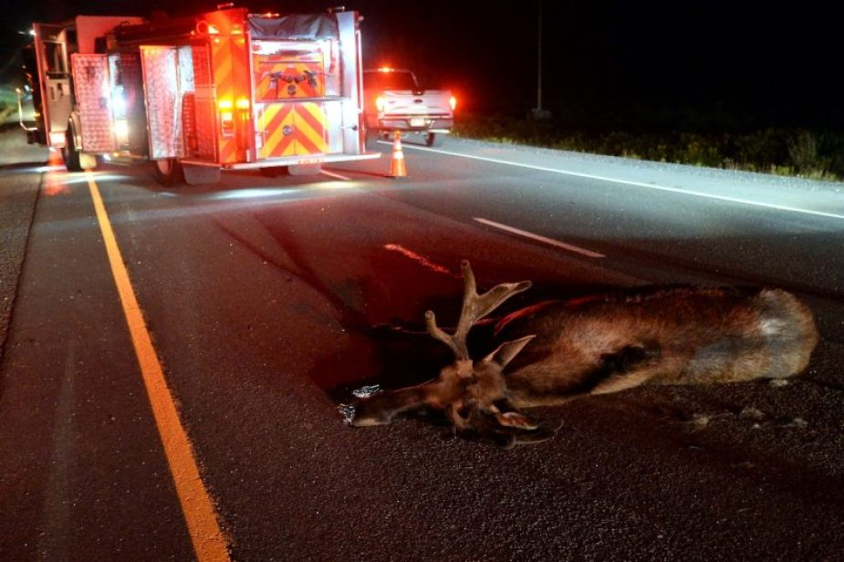 C7 Corvette Canada Moose Collision