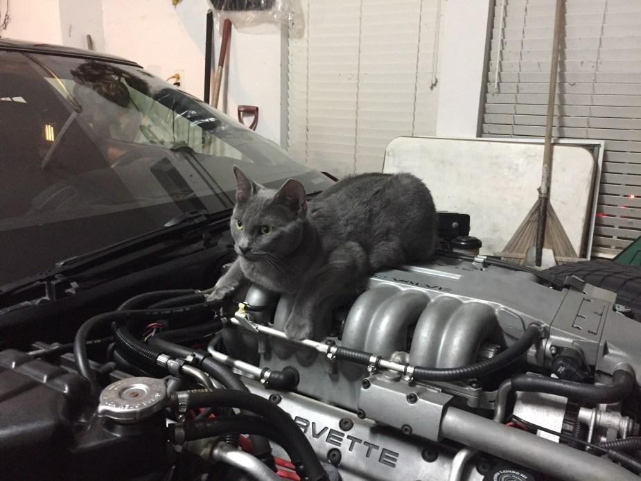 Cat on LT-5