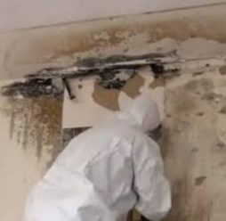 removal of mold