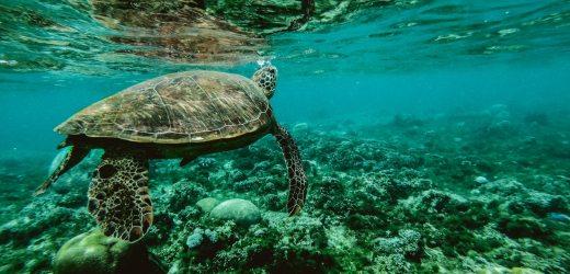 Dove fare snorkeling in Sicilia