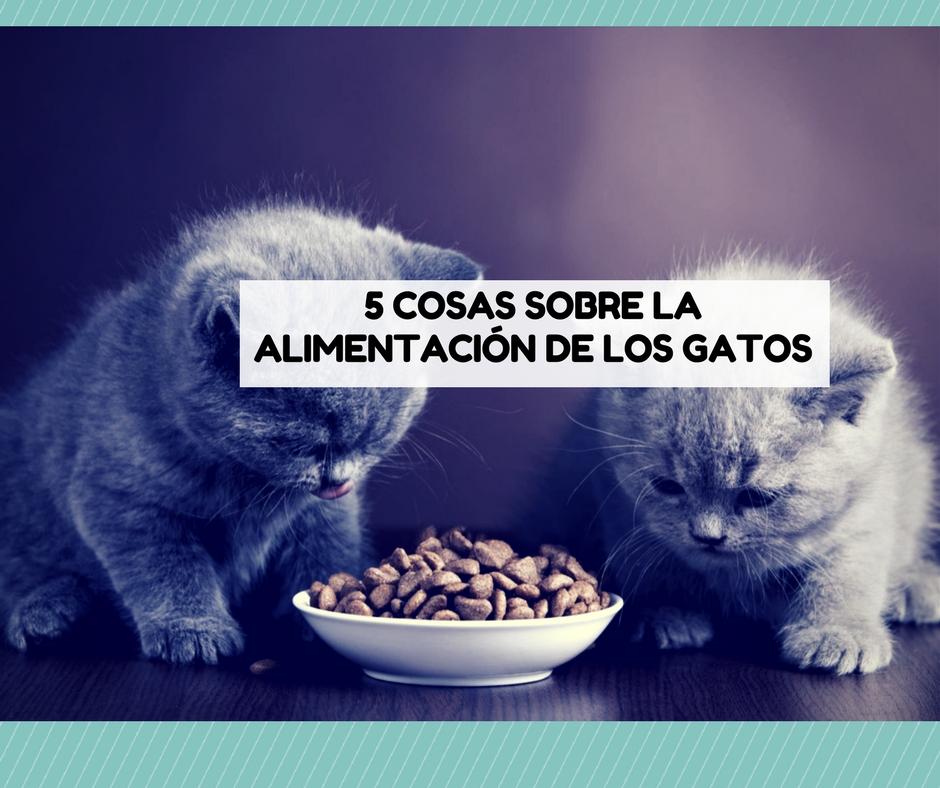 alimentacion gato comida
