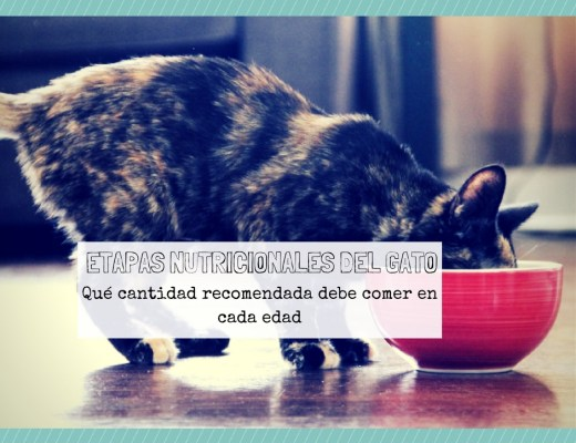 etapa nutricional gato que cantidad comer