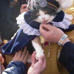 La gatita Tama en un acto celebrado en su honor | Foto: www.wikipedia.com