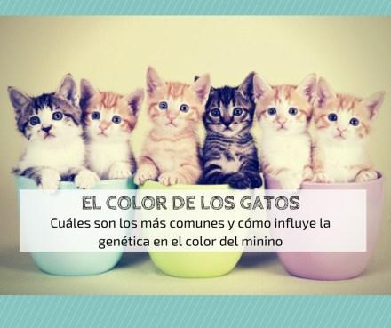 color pelaje gatos genética