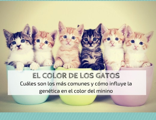 color pelaje gatos genética