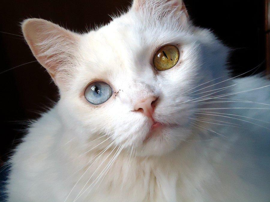 Los ojos de los gatos  Cosas de Gatos
