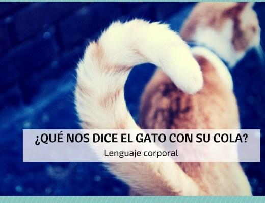 lenguaje corporal gato cola