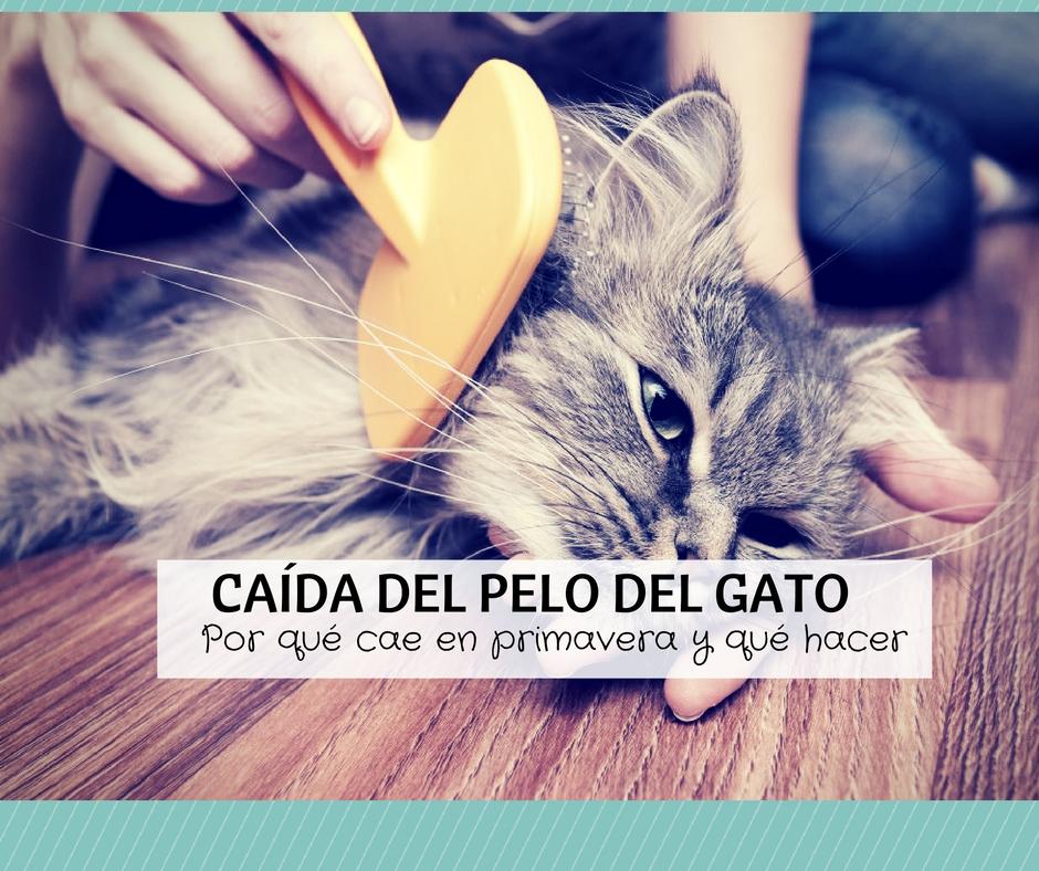 Ca da del pelo del gato en primavera poca de muda cosas de gatos - Cuidados gato 1 mes ...