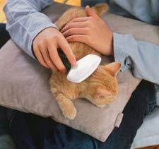 El cepillado diario del gato ayuda a eliminar pelos muertos, evitar que trague bolas de pelo y dejar espacio para el nuevo pelo