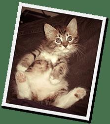 El gato Hank fue recogido de las calles con su madre y hermanitos