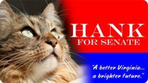 El gato Hank se presenta a la candidatura del Senado de los EEUU