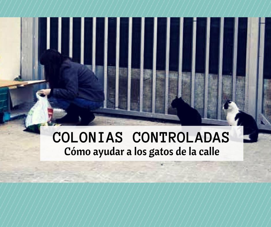 colonias controladas gatos calle
