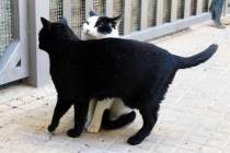 Gatos callejeros de una colonia controlada de Barcelona