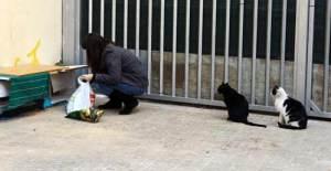 El equipo de Cosas de Gatos dando de comer a los gatos de la colonia de Sants (Barcelona)