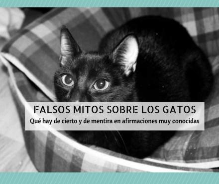 falsos mitos gatos