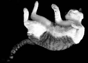 Los gatos tienen un cuerpo muy flexible pero no siempre caen de pie y quedan ilesos | Foto: fanaticdoll.deviantart.com