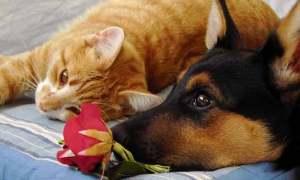 Muchos perros y gatos conviven en perfecta armonía   Foto: akinna.deviantart.com