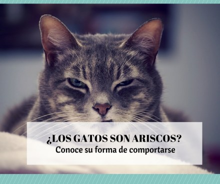 Por qué gatos ariscos