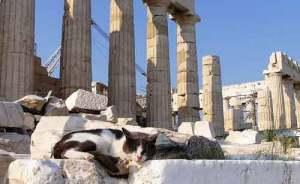 En Grecia se usaba un mismo término para nombrar a varios animales de larga cola | Foto: flickr.com/photos/helenicos
