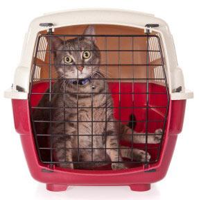 Utiliza un buen trasportín en los viajes de tu gato
