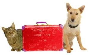 Infórmate de las condiciones de viaje de mascotas de tu compañía aérea o tren | Foto: edreams