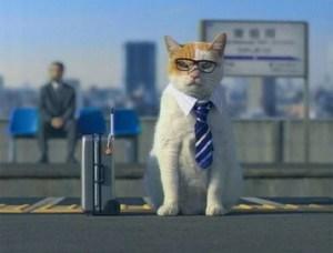 Consejos para viajar con gatos   Foto: http://www.japanprobe.com