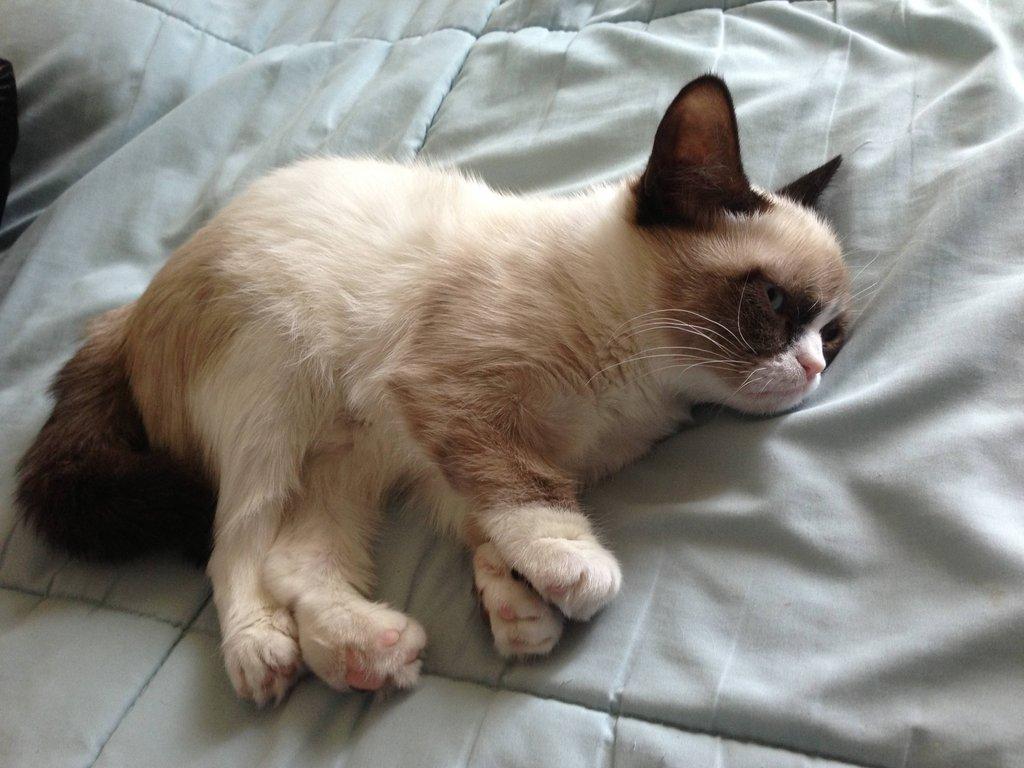 Grumpy Cat nació en abril de 2012 y se hizo famosa en septiembre
