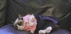 Grumpy Cat es una gatita adorable llamada Tard