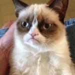 Grumpy Cat tiene una malformación que le hace parecer enfadada todo el tiempo