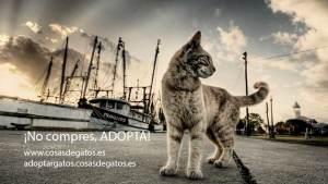 Adoptar a un gato, razones y cómo hacerlo