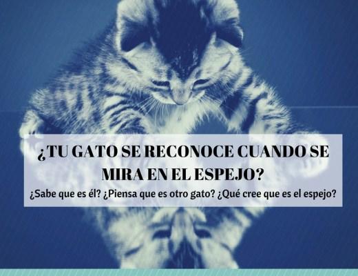 reacción gato espejo