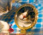 El gato puede reconocerse en el espejo, pero no del mismo modo que nosotros | Foto: french-mermaid.deviantart.com