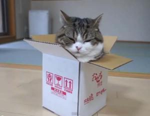 Maru se ha hecho famoso con sus vídeos de Youtube, especialmente en los que sale metiéndose en una caja | Foto: captura de Youtube
