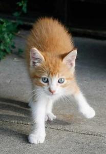 No dejes que tu gato salga en San Juan o fin de año, los petardos podrían hacerle daño o que él saliera corriendo   Foto: rebelfire.deviantart.com