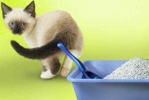El gato puede rechazar su bandeja de arena o la propia arena