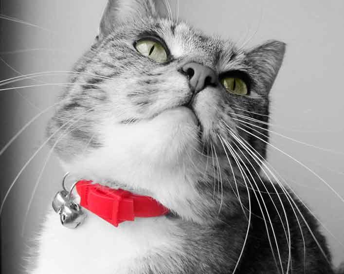 Si tu gato no necesita llevar collar, no se lo pongas