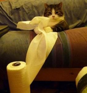 Precauciones para gatos con resfriado o constipado | Foto: Google Images