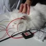 El test BAER se utiliza para determinar si un gato es sordo