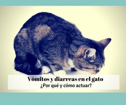 trastornos digestivos gatos