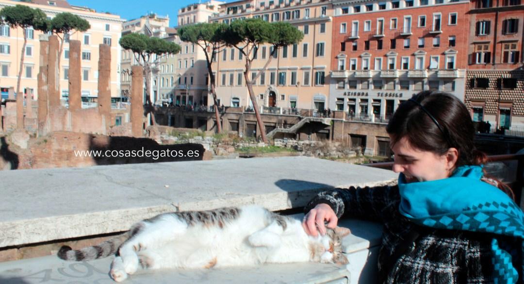 Un gato se acerca desde las ruinas