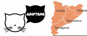 Protectoras y entidades en las que adoptar gatos en Barcelona, Lleida, Tarragona o Girona