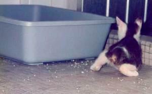 Los gatos salvajes no tapan sus heces | Foto: pergamjee.deviantart.com