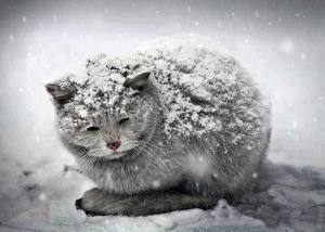 El resfriado es una enfermedad común entre gatos | Foto: kittehkats.tumblr.com