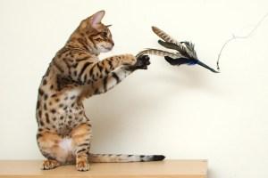 Gato jugando con una varita | Foto: zastavki.com