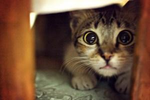 por qué mi gato tiene miedo