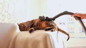 un truco para saber si el gato es sordo es encender la aspiradora
