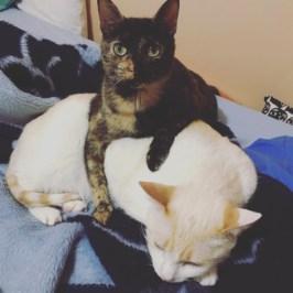 Conxa y Kato en la cama