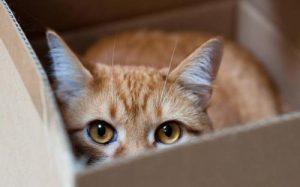 Las cajas son perfectas para que el gato se esconda y ataque a su presa