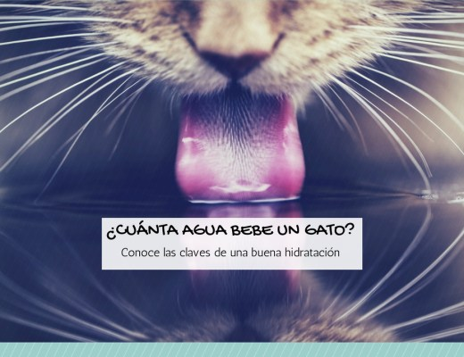 Cuanto necesita beber un gato